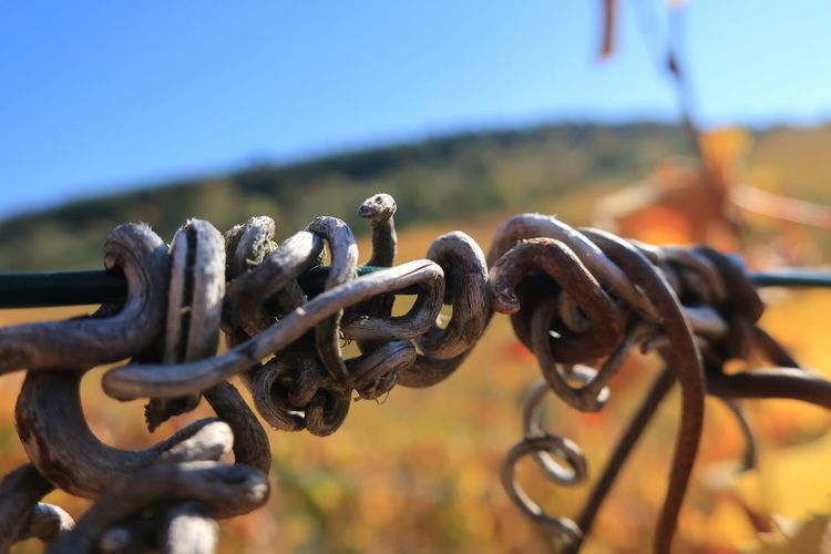 Close-up of chain against clear sky