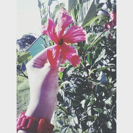 Flowers ♥ツ A Beautiful Life