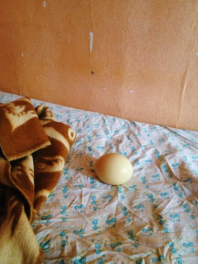 Egg Indoors  Ostrich Eggs Home Interior Bed No People Blanket Close-up Sad Nopeople Melancholic Still Life StillLifePhotography Old Fashioned Weird