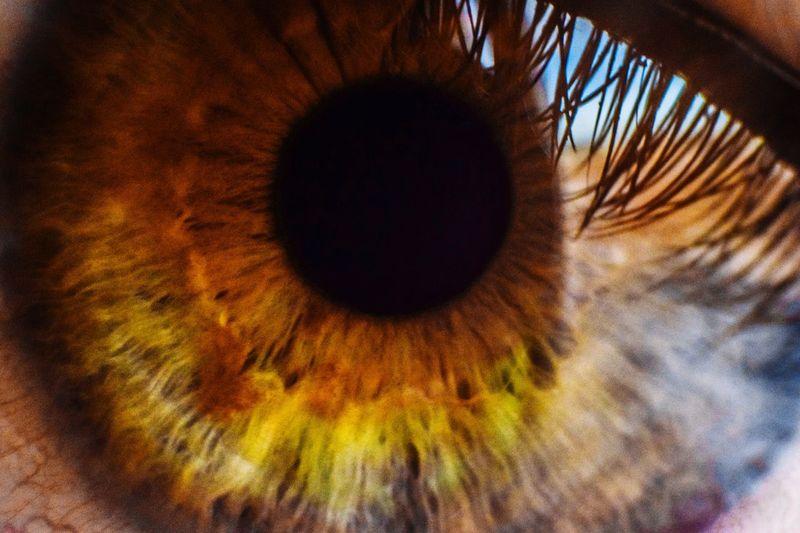 Human Eye Eyeball Iris - Eye Eye Macro Photography Macro Close-up Eyelovephotography