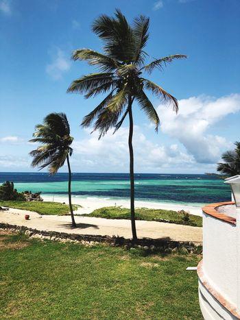 #resort Plant Tree Water Sea Beauty In Nature Sky Growth Scenics - Nature Beach Nature