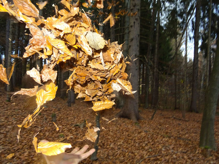 Hand TreeHuman Body Part Leafs Leaf Autumn Nature Outdoors Day Tree Trunk No People Branch Beauty In Nature Close-up