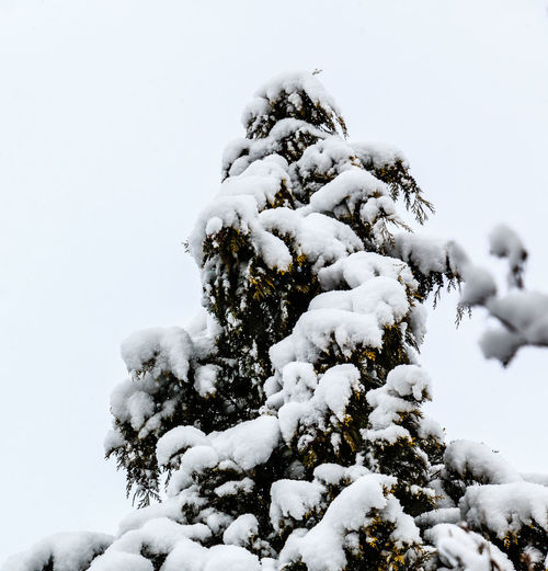 snowy tree Beauty In Nature Close-up Cold Temperature Day Nature Outdoors Snow Tree Winter
