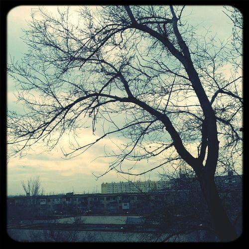 дерево в небесах