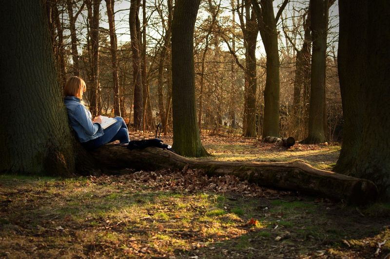 Study Education Studying Tree One Person Forest Trunk Tree Trunk Land Plant Nature Leisure Activity Sitting Tranquility Relaxation Side View Sunlight Real People Day WoodLand