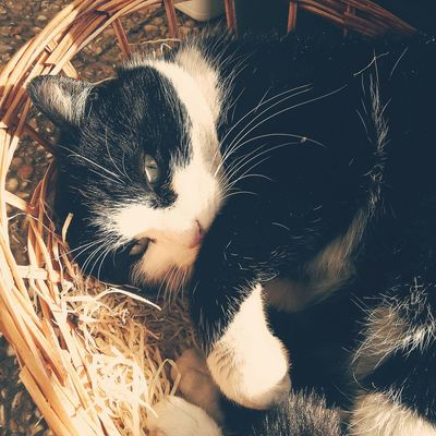 Meow Cat Cat Lovers Cat Photography Cat Eyes Sguardi Intensi Nature_collection Cat In A Basket  Cat Life Black & White