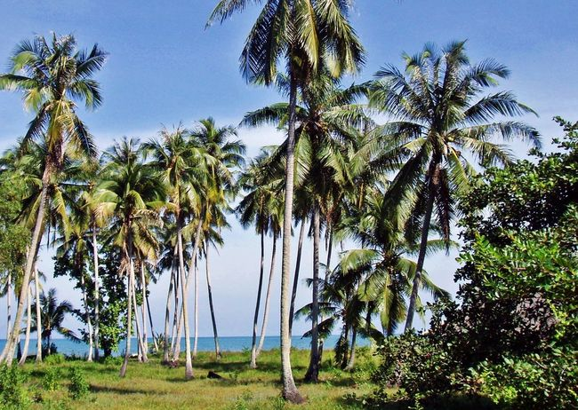 Laem Son Beach Beauty In Nature Coconut Palm Tree Idyllic Outdoors Pak Nam Lang Suan Palm Tree Sunlight Thailand Tranquil Scene Travel Destinations