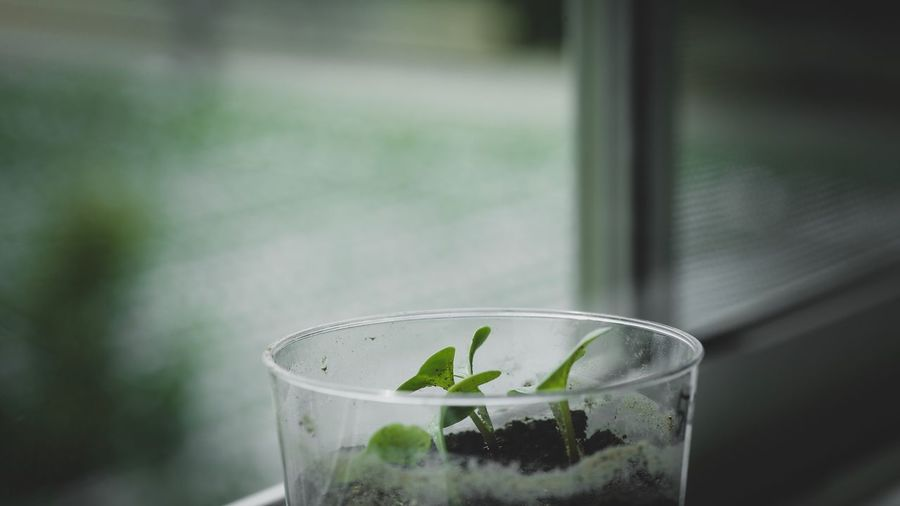 Close-Up Of Seedlings Growing In Glass By Window