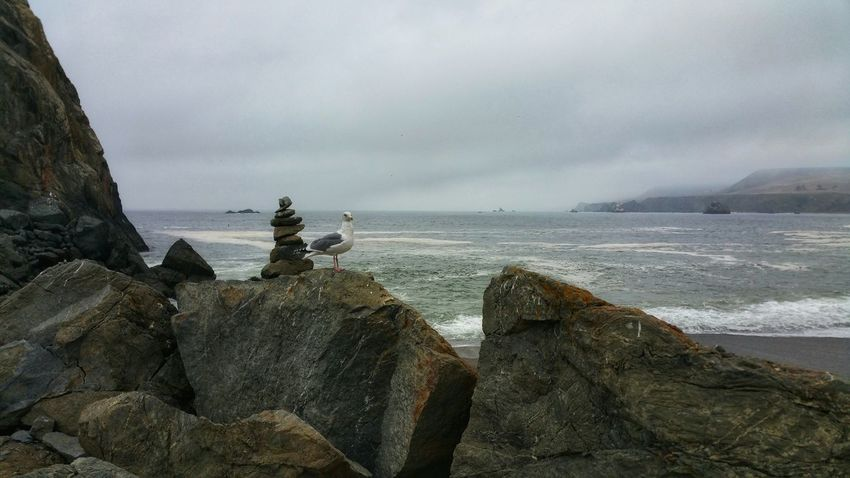 Watchful pigeon. Meditation stones balanced on ocean boulders. Stormy foggy day. Pigeon Balanced Meditation Stones Solitude Solitary Zen Stormy Foggy Mysterious Romantic Dreamy Clouds Misty Meditation Atmospheric Dramatic Moody Watching Water Sea Beach Fog Rock - Object Sky Horizon Over Water Stack Rock Geology Eroded Rugged Rock Formation