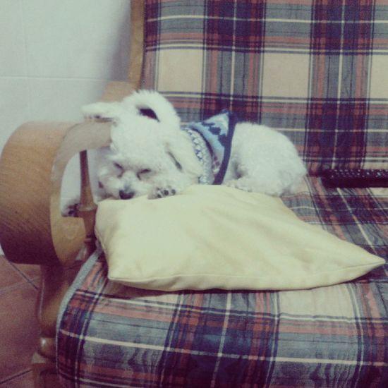??❤ I Love My Dog Hi!