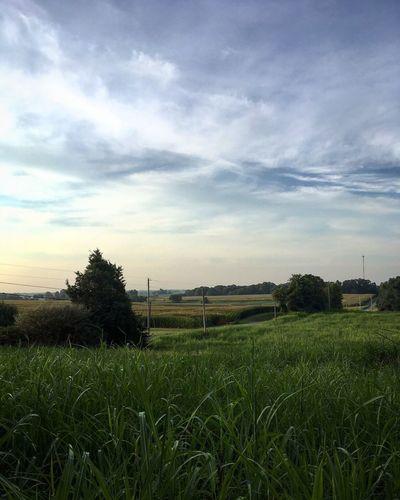 Rural View