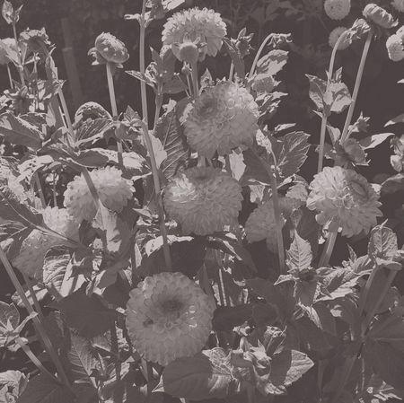 Looking through my Grey Sunglasses Shades Of Grey Grey Routine Life Blackandwhite Black And White Black & White Flowers Nature Eye4photography  Jopesfotos - Nature