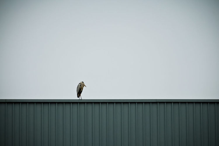 Low angle view of heron on metallic container against clear sky