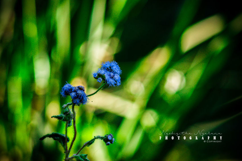 Flower Plant Growth Beauty In Nature Freshness Close-up Flower Head Petal Green Color Nature Botany
