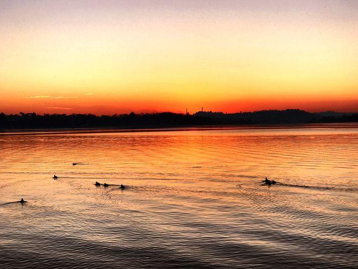 Lake Lake View Sunset Nature Orange Color Animals In The Wild Bird Water Animal Wildlife