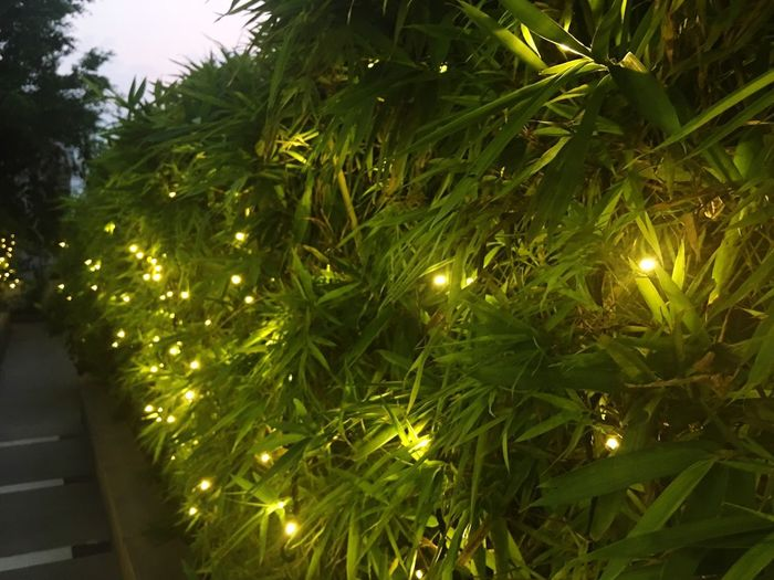 Plant Illuminated Tree Green Color Decoration Growth Lighting Equipment No People Night Light
