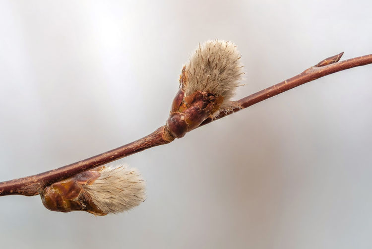 Close-up of dried plant on branch