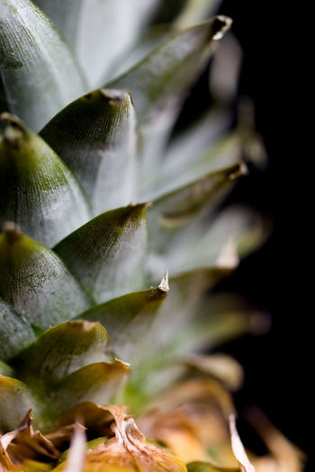 Pineapple macro shot with selectivefocus on leaves Dream Exotic Green Color Overlay Pineapple Abstract Beauty In Nature Close-up Details Extreme Macro Fine Art Flap Fold Food Freshness Fruit Greenery Growth Leaf Nature Plant Precision Ripe Fruit Vitamin Vitamin C