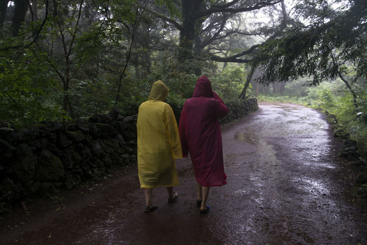 rainy day of Bijarim which is a famous forest in Jeju Island, South Korea Adult Beauty In Nature Bijarim Day Forest Friendship Full Length JEJU ISLAND  Men Nature Outdoors Pathway People Rain Real People Rear View The Way Forward Togetherness Tree Two People Walking Women
