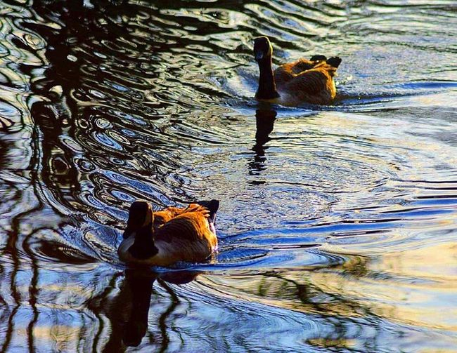 Lake Bird Outdoors Waterfront Nature Close-up Animal Wildlife Day
