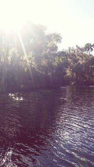 Florida ? Florida Relaxing Nature Beautiful Palm Trees River Florida Life Water