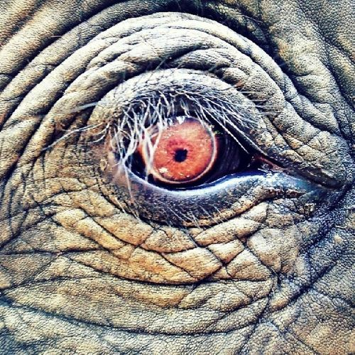 elephant eye Snapseed Cymera