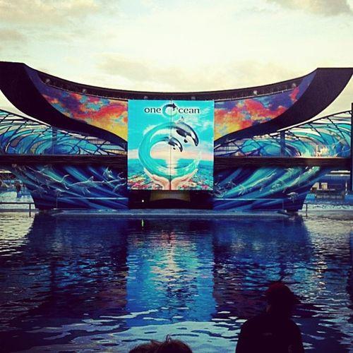 a ver a Shamuu <3 Shamuu Orlandoseaworld Seaworld Awesome