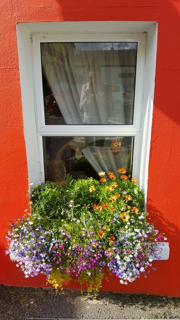 Flowers Window Flower Glass - Material Red Plant Day Nature Carlingford