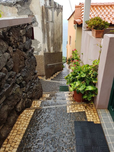 Pattern Texture Stone Paving Basalt Rock Marmor Bildfolge Photography Atlantic Ocean Cityscape Cityscape Photography Cityscape Street Views Alley Flowers Plants Rain Water Nature Stone Architecture Built Structure Building Exterior Day Outdoors No People Close-up High Angle View Nature