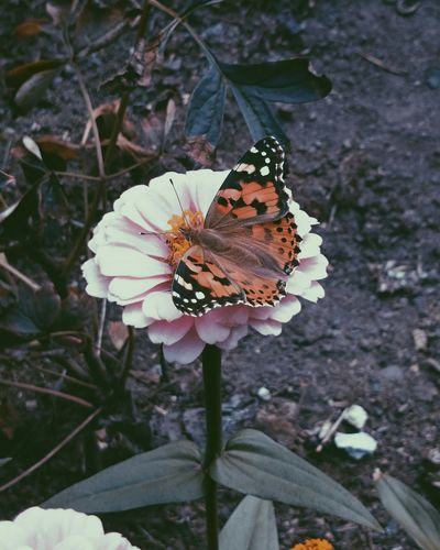Butterfly 💜✨ Summer Taking Photos Hello World Enjoying Life Blomster Blumen 花 Flowers Photooftheday Check This Out Taking Photos Butterfly Butterfly Collection