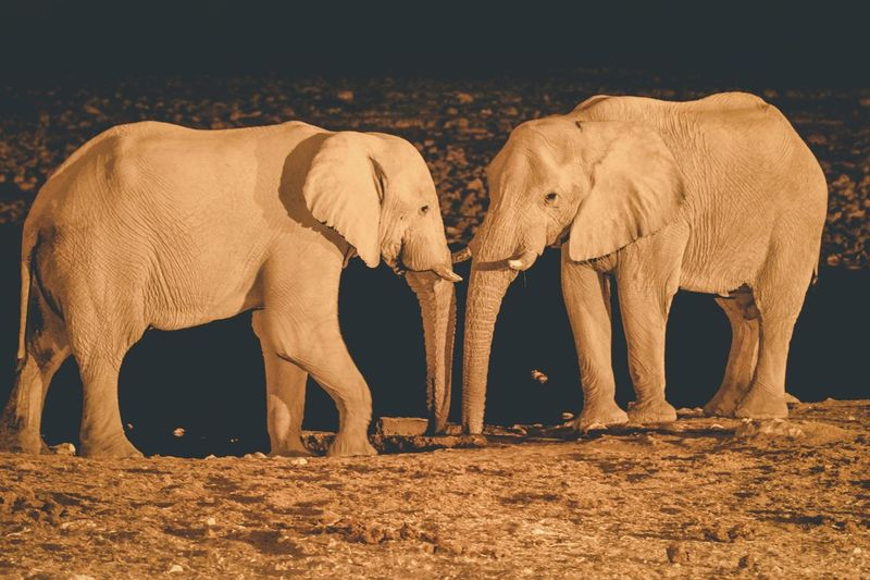 Elephants standing on land