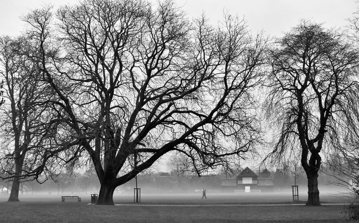 Bare Tree Beauty In Nature Branch Day In The Park Leamington Spa UK Lone Figure Misty Evening Nature Outdoors Sky Tranquility Tree Walking Urban Landscape