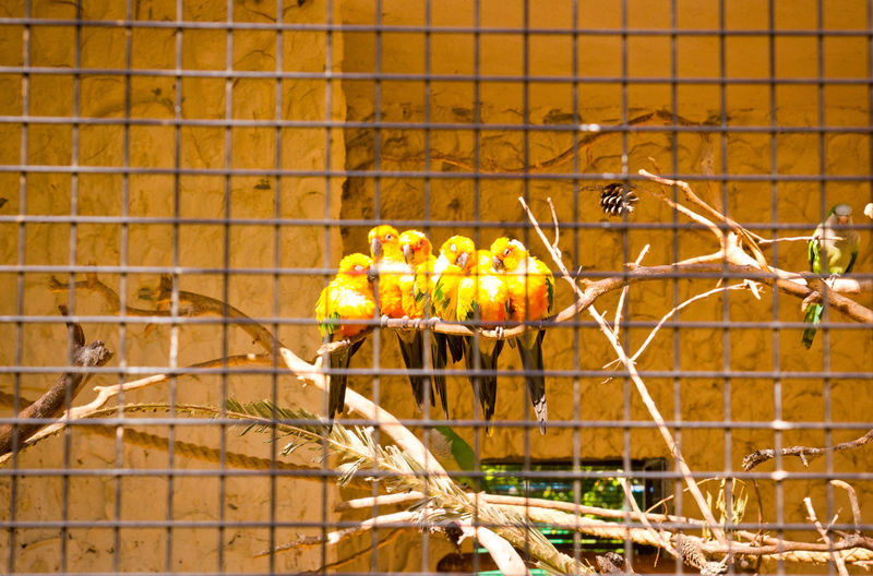 Family Unity Zoo Telaviv Israel Papagei Yellow Travel Nature SUPPORT