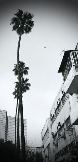 Cityscapes Palm Tree No People Architecture Cityscape Palm Tree And Sky Blackandwhite Black And White City Life City Street