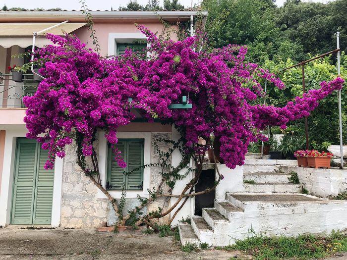 Greek scene -