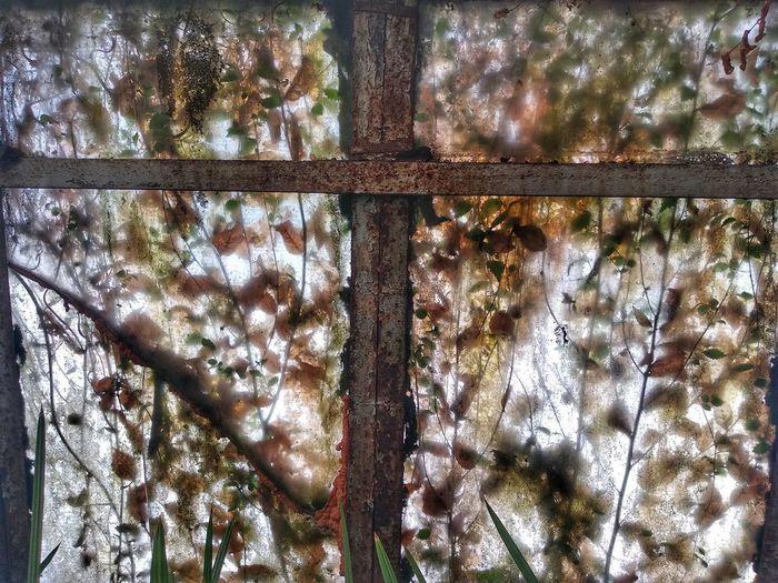 Full frame shot of trees seen through glass window