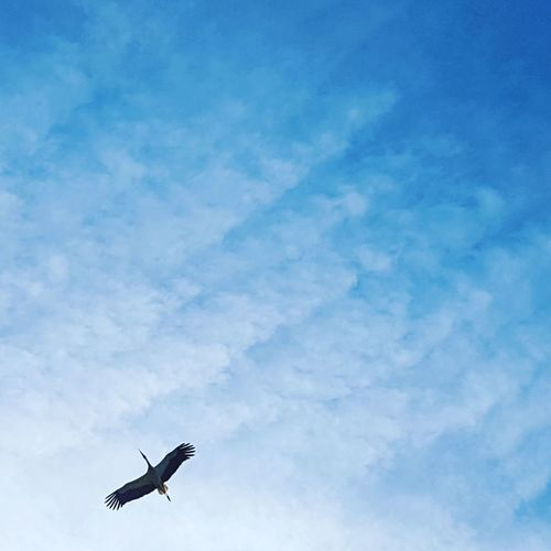 Flying Sky Cloud - Sky Transportation Low Angle View Blue Nature Birds🐦⛅ Nature Day Outdoors Ooievaar In Vlucht Ooievaar Storks In The Wild storch