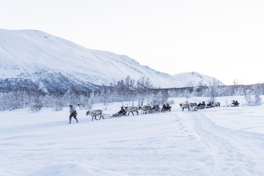Norway Reindeer Reindeer Sighting Adventure Beauty In Nature Clear Sky Cold Temperature Day Frozen Landscape Leisure Activity Lifestyles Mountain Mountain Range Nature Outdoors Real People Scenics Snow Snowcapped Mountain Tranquility Vacations Weather White Color Winter Shades Of Winter