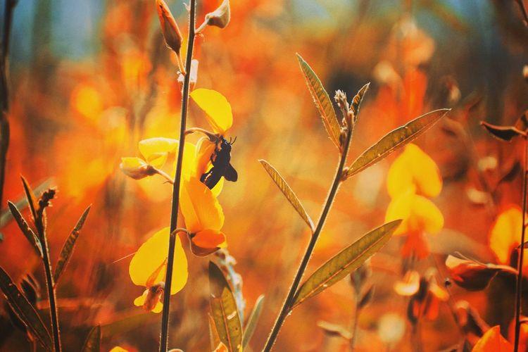 Honey Bee Honey HoneyBee Flower Yelow Checj Flower Leaf Close-up Plant Insect Bee