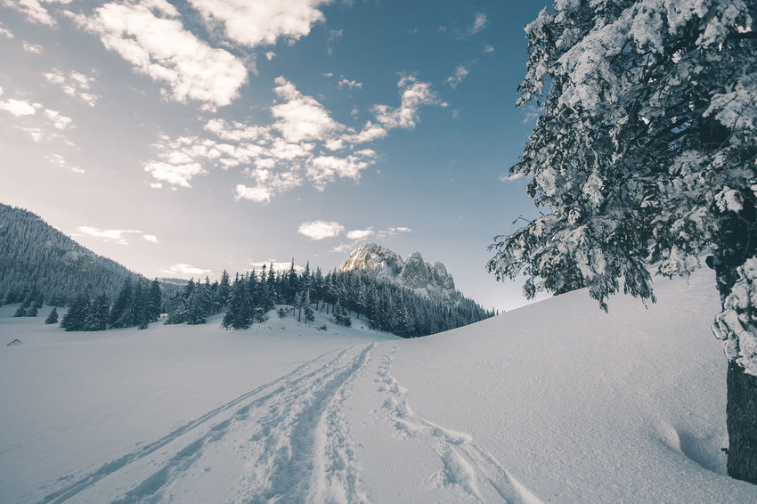 Beauty In Nature Cloud - Sky Cold Temperature Covering Day Environment Mountain Nature No People Non-urban Scene Plant Scenics - Nature Sky Snow Snowcapped Mountain Tranquil Scene Tranquility Tree White Color Winter