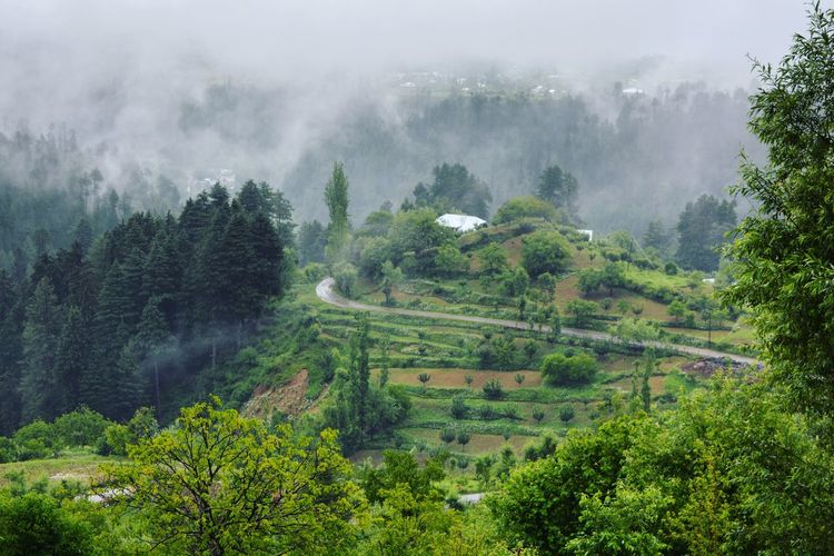 A Village In Kashmir During Rain Tree Nature Agriculture Landscape Mountain Outdoors Beauty In Nature Rural Scene No People Forest Tea Crop Fog Social Issues Scenics Cloud - Sky Growth Terraced Field Day Sky Lahore Pakistan Revoshots Travel Destinations Mountains And Sky Himalayas