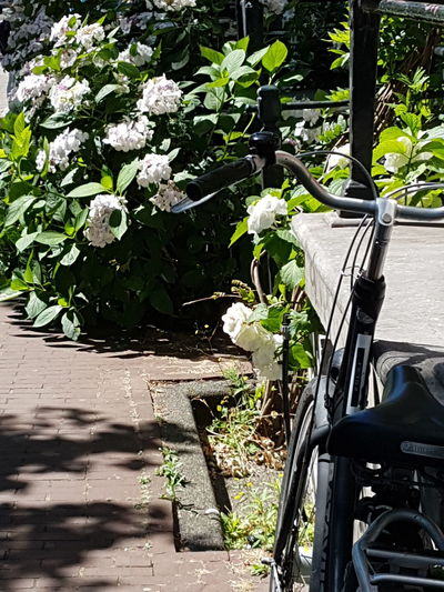 Amsterdam Canal Amsterdamcity Amsterdam Amsterdamse Grachten Flowers Bicycle Bicycle Rack Path Summertime ♥ Summertime Travel Writing Sunlight Flower Plant Cycling Bicycle Lane