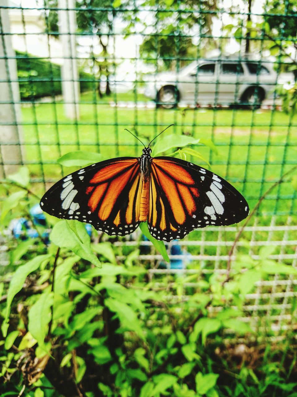butterfly - insect, insect, animal themes, animals in the wild, one animal, butterfly, nature, animal wildlife, green color, day, outdoors, no people, growth, focus on foreground, animal markings, close-up, fragility, full length, beauty in nature, freshness, perching