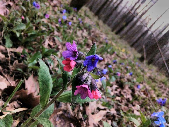 Growth Flower