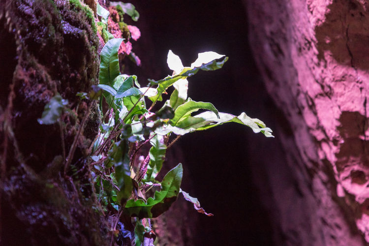 Plants growing near lights inside a cave. High ISO Greenery Green Leaves Leaves Nature Low Light Plants Beauty In Nature Cave Cave Plants Caves Close-up Fern Fragility Greenery Growth Leaf Low Light Photography Nature No People Plant