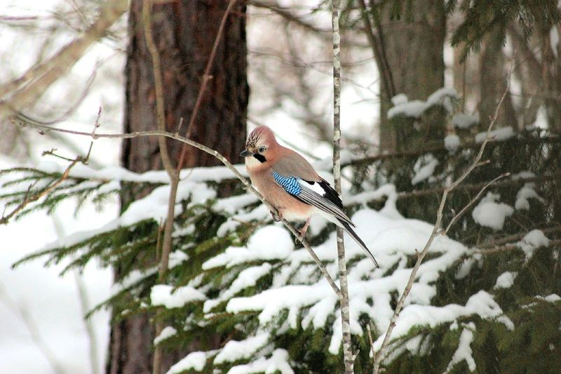 Bird perching on twig during winter