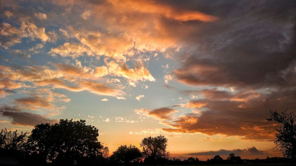 Tree Sunset Dramatic Sky Silhouette orange color Sky Beauty In Nature Low Angle View Cloud - Sky Nature Scenics No People Tranquility Outdoors Blue Day