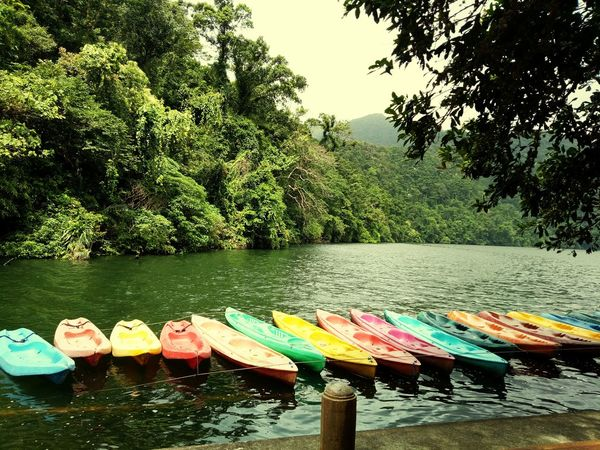 Meet the Kayaks. EyeEmNewHere Tree Water Multi Colored Pedal Boat Sunlight Sky Colorful Canoe Kayak Rowing Variety Going Remote