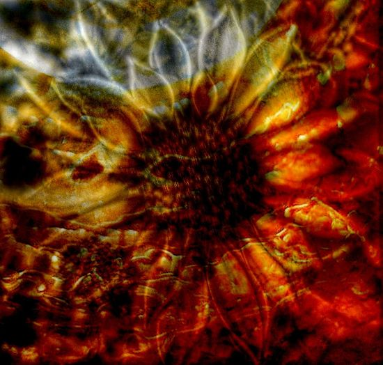 Overlay Editing EyeEmNewHere Backgrounds Red Fire Otherworldly Abstract Photography EyeEm Best Shots Full Frame No People Close-up Flower Flower Head Fragility Beauty In Nature Nature