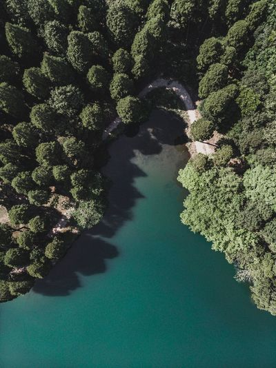 Dronephotography Drone  Nature Plant Green Color No People Water Tree Day High Angle View Beauty In Nature Shadow Growth Scenics - Nature Outdoors Sunlight Aerial View Sea Tranquility Land Tranquil Scene Focus On Shadow
